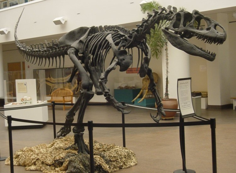 <p>The Allosaurus may have fed from prey in a fashion more like a modern falcon than a Tyrannosaurus Rex, new research suggests.</p>