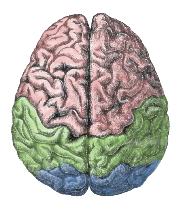 <p>A new study says that what hand you use to speak on your cell phone determines what part of your brain is dominant.</p>