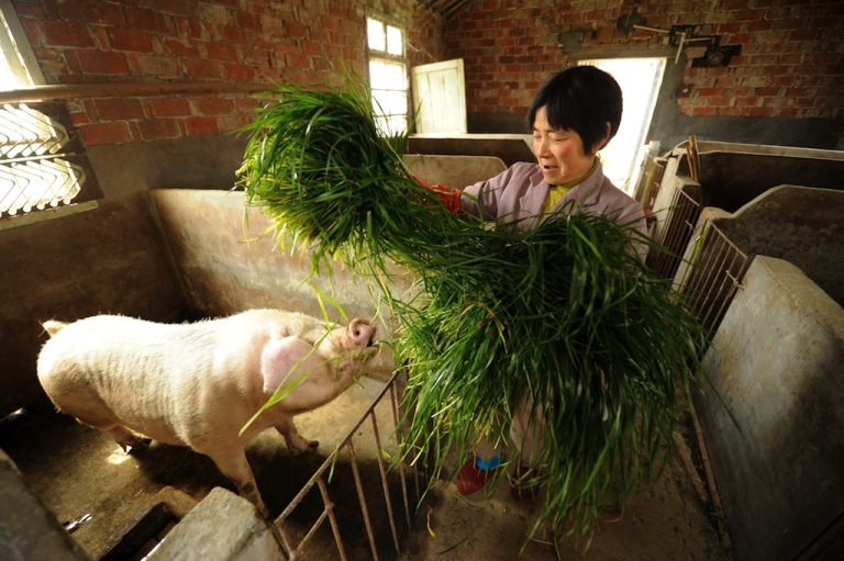 <p>Chinese farmers have been left behind after 30 years of rapid economic growth, the China Daily said last week, underscoring the importance of land reforms.</p>