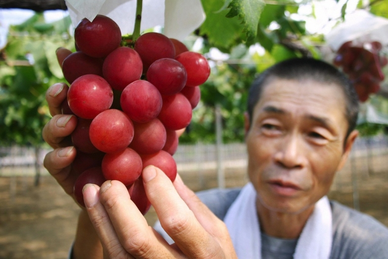 <p>Japanese farmer Tsutomu Takemori displays a cluster of recently-developed