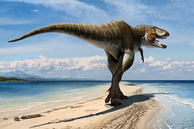 """<p>Researchers revealed a newly discovered dinosaur, Lythronax Argestes, on Nov. 6, 2013 at the National History Museum of Utah. Its names translates as """"king of gore"""" from the American Southwest. Previously, paleontologists thought this type of wide-skulled tyrannosaur only appeared 70 million years ago, whereas Lythronax shows it had evolved at least 10 million years earlier.</p>"""