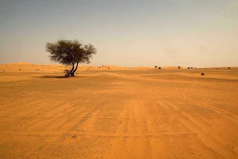 <p>A landscape view dated May 2003 shows the Saharan desert in southern Algeria, near the city of Illizi. Dozens of Nigerien migrants heading for Algeria died of thirst in the desert south of the Sahara after their vehicle broke down, local officials said on October 28, 2013 while police said 21 survived.</p>