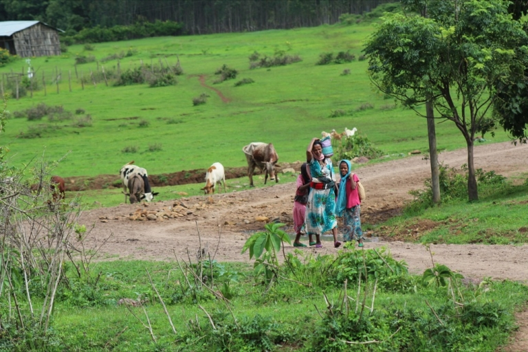 <p>A woman and children return from the fields in Awra Amba.</p>