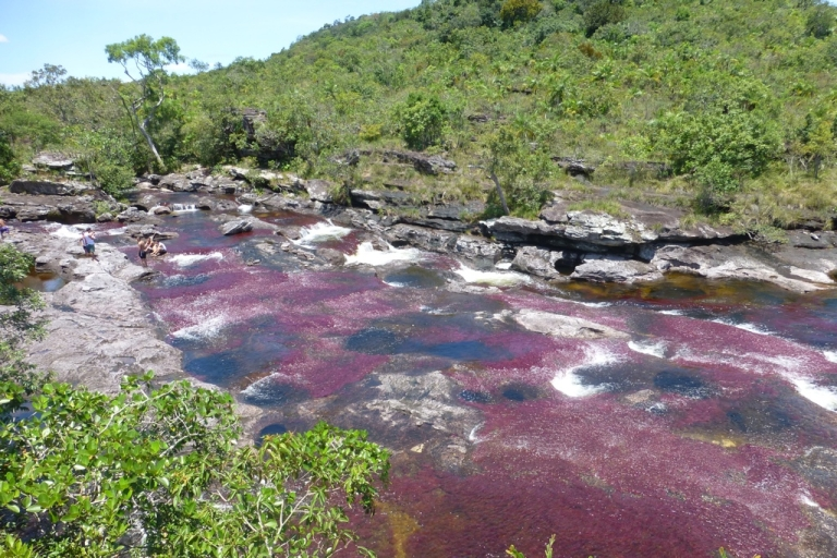 <p>Colombia's Caño Cristales has a series of gorgeous mountain streams that cascade over purple, red and yellow aquatic plants, turning the rivers into liquid rainbows.</p>