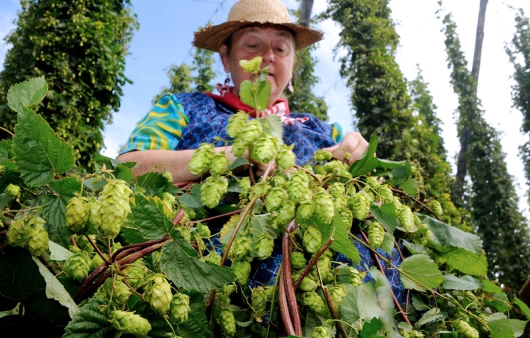 <p>The study found pottering around the garden can help improve the cardiovascular health of people over the age of 60.</p>
