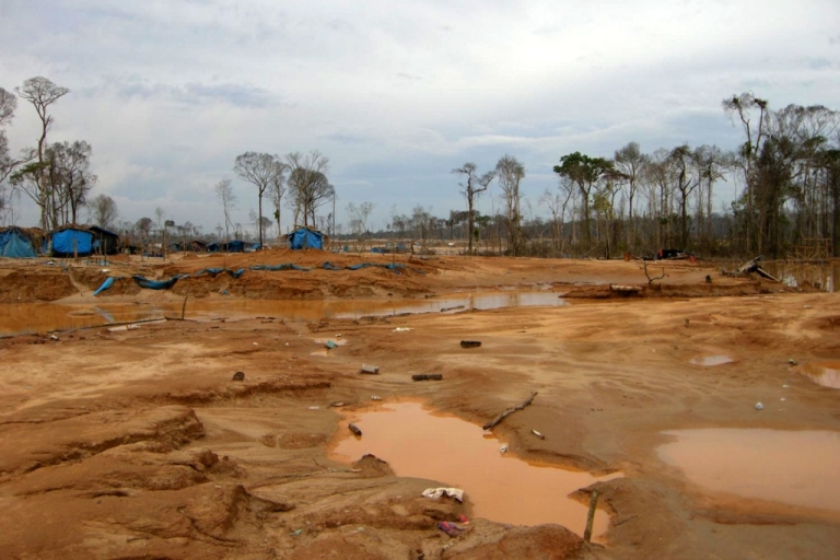 <p>Where did the Amazon forest go?</p>