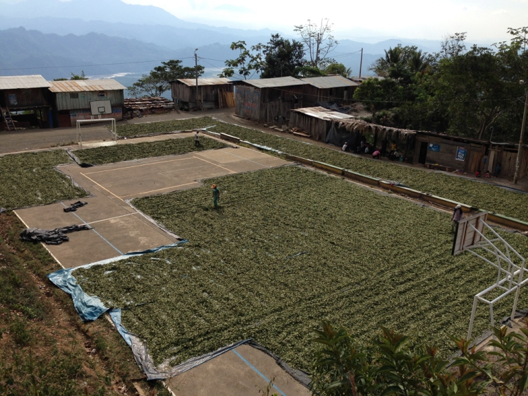 <p>A village plaza full of drying coca leaves.</p>