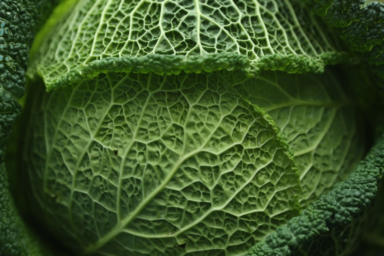 <p>A cabbage.</p>