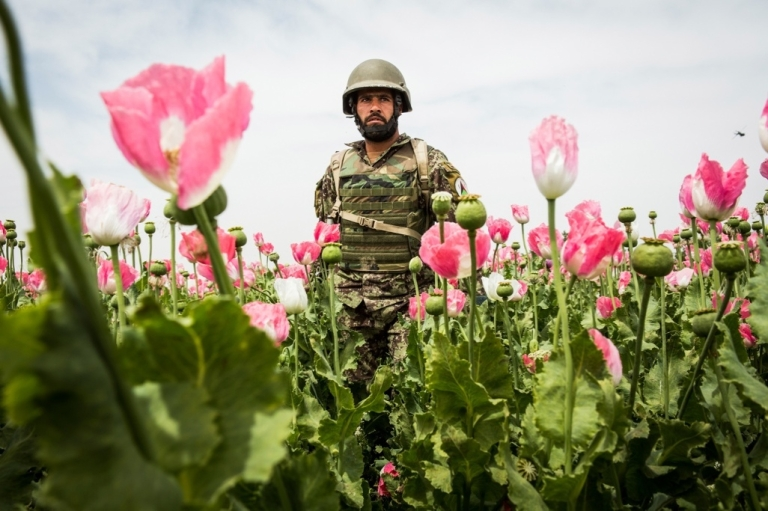 <p>An army soldier walks through a poppy field during a joint patrol with the US Army near Pa'in Kalay in Kandahar province.</p>