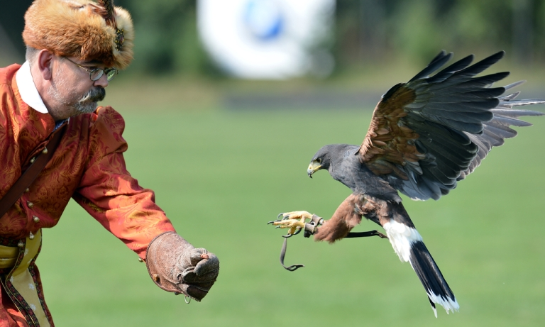 <p>A Harris Hawk prepares to land on a falconer's glove during a show near Warsaw, Poland, on Sept. 3, 2012.</p>