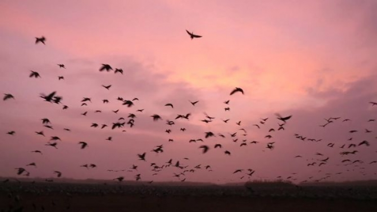 <p>A re-flooded wetland in Israel's Hula Valley has become a refuge for birds from three continents.</p>