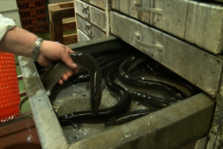 <p>Screen grab from GlobalPost On Location video about the fading UK custom of eating eel.</p>