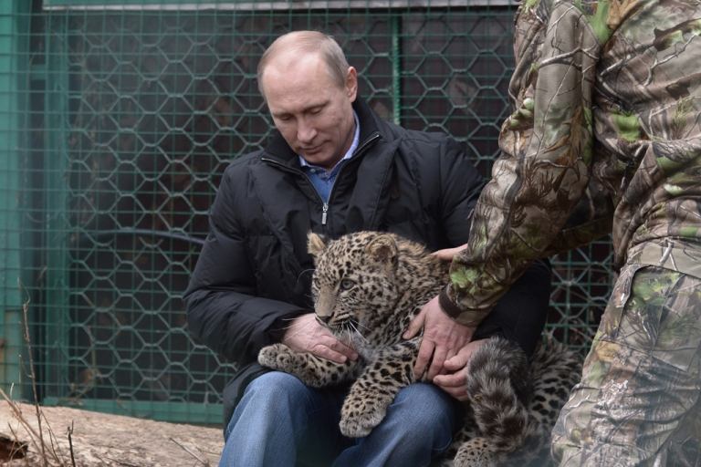 <p>Russia's President Vladimir Putin caresses a Persian leopard cub as he visits the Persian leopard breeding and rehabilitation centre in the National Park in the Black Sea resort of Sochi, on Feb. 4, 2014.</p>
