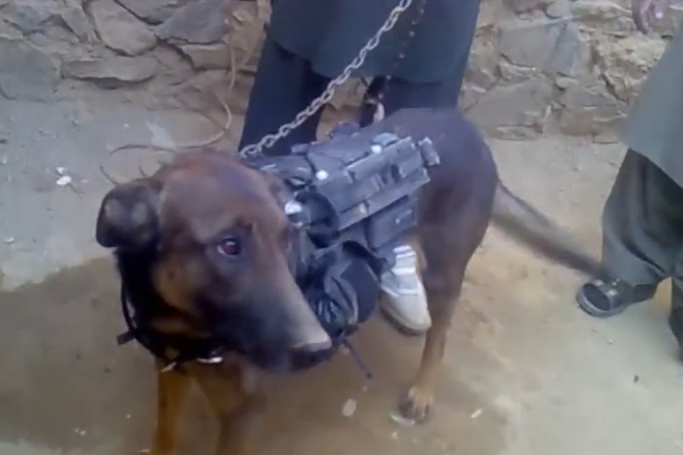 <p>In a video released Feb. 6, 2014, the Taliban claimed to have captured a military dog following a raid late last year in eastern Afghanistan.</p>