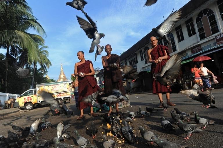 <p>Buddhist monks feed pigeons near the Shwedagon pagoda in Yangon on May 9, 2014.</p>