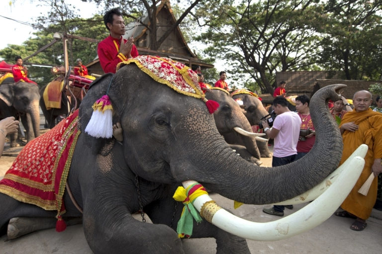 <p>Thai mahouts pray while sitting on their elephants as part of the elephant banquet to mark