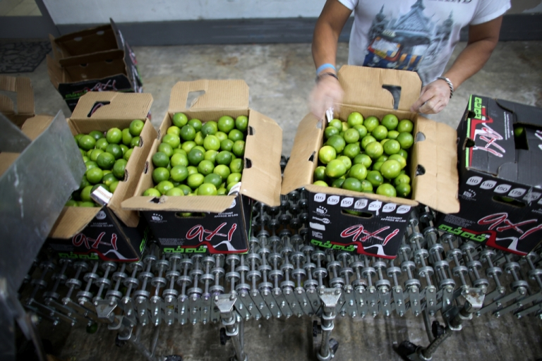 <p>Limes that have been imported from Columbia are boxed at Samex Produce in Miami, Florida, on March 26, 2014.</p>