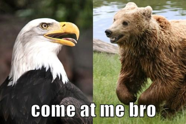 <p>Left: Bald Eagle (William Warby via Flickr Commons). Right: Brown Bear (Wikimedia Commons).</p>