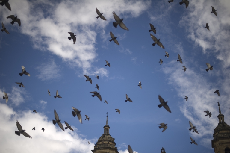 <p>Pigeons fly over Bolivar Square in Bogota, Colombia, on Oct. 1, 2011.</p>