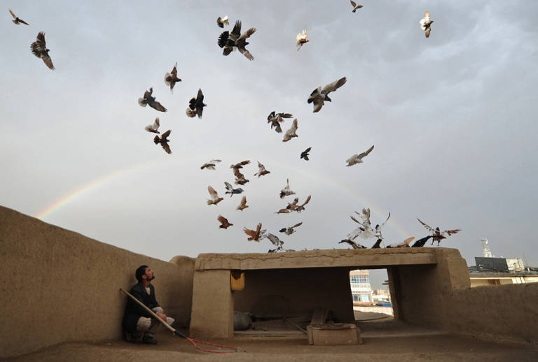 <p>An Afghan man watches pigeons on the roof of his house as a rainbow forms in the background. A new study has found that pigeons' may have