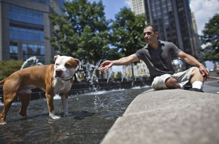 <p>NEW YORK - JULY 12: Herb Nieves and his dog Max, a red nose pitbull, cool out in the Columbus Circle fountain during a heat wave on July 12, 2011 in New York City. The National Weather Service has issued a heat advisory as the heat index is expected to reach 100 in New York City. The city has kept cooling centers open to help residents beat the heat and humidity.  (Photo by Ramin Talaie/Getty Images)</p>