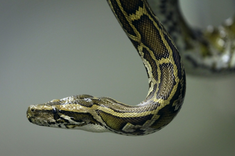 <p>When snakes attack.</p>