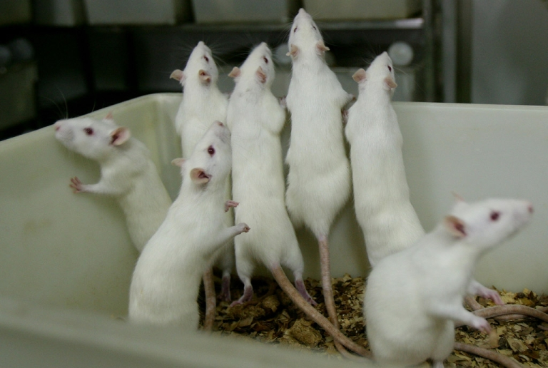 <p>Rats allegedly attacked a 70-year-old man in a government-run hospital in India.</p>