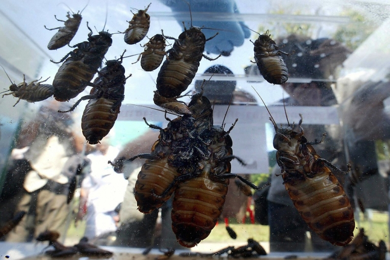 <p>Edward Archbold, 32, vomited after downing more than 20 giant bugs during a