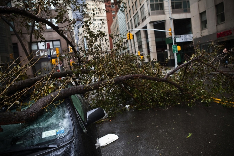 <p>A car crushed by a tree in the financial district of New York City.</p>