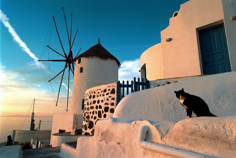 <p>This cat in Santorini, Greece won't be alone for long if tourists flock, as expected, to southern Europe in the wake of unrest in North Africa and the Middle East.</p>