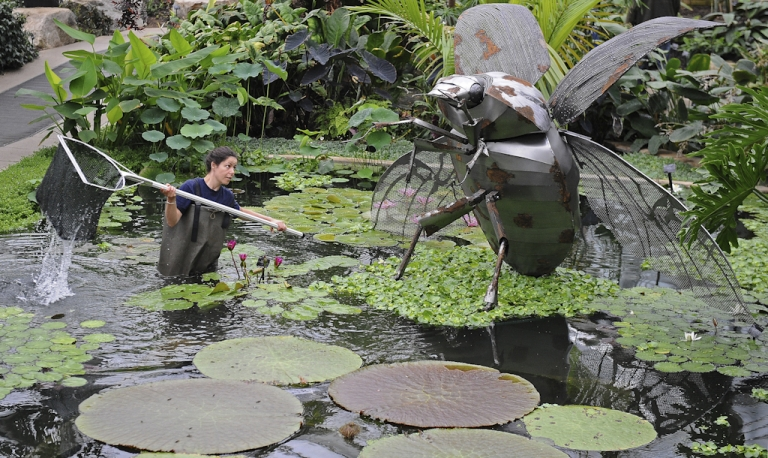 <p>Employee Amy Mordan stands in a lily pond with a giant beetle metal sculpture, as she poses for photographers during a photocall at Kew Gardens in London on May 27, 2010. A swarm of what may be Tasmanian grass grub beetles showed up on radar in New Zealand on Feb 21 and 22, confusing weather-watchers.</p>