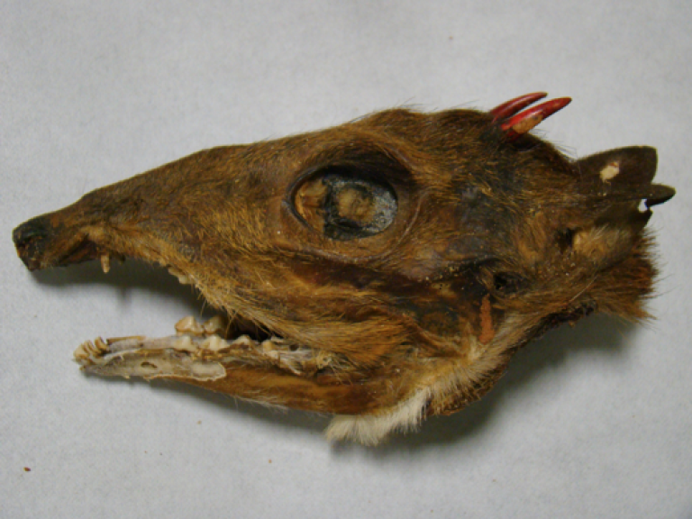 <p>What appear to be mouse door skulls, shipped from Laos to Minnesota, were intercepted by customs agents in California.</p>
