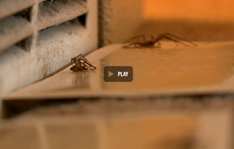 <p>Screengrab from KETV footage of the spider infestation in a Nebraska man's apartment.</p>