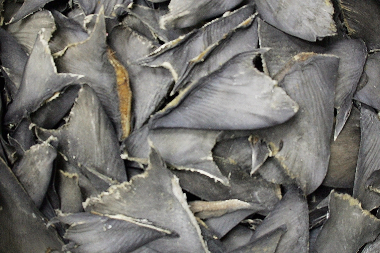 <p>Shark fins in a bag await delivery at a wholesale warehouse in Hong Kong, where they will be used for dishes like shark fin soup. Conservationists have fought to stop the practice of shark finning.</p>