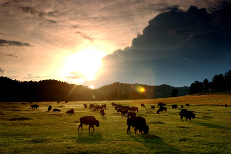 <p>Land in the Black Hills of South Dakota that is considered holy ground for the Great Sioux Nation will be sold at auction in a week. Several tribes are raising money to try to buy the land.</p>