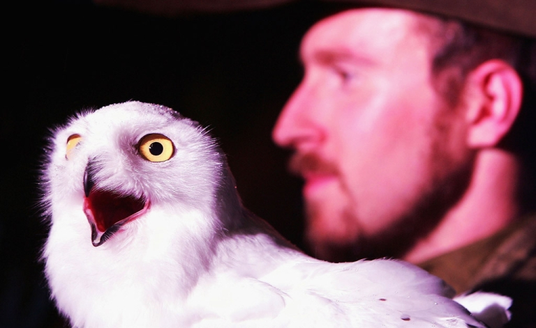 <p>A snow owl sits on an actors hand during the Harry Potter And The Prisoner Of Azkaban launch party. The snowy white birds have been sighted in record numbers across the US this winter.</p>