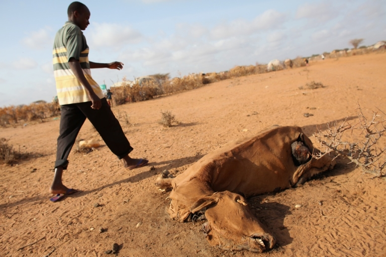 <p>A refugee walks past a cow which died from starvation at the edge of the Ifo refugee camp which makes up part of the giant Dadaab refugee settlement on July 22, 2011.</p>