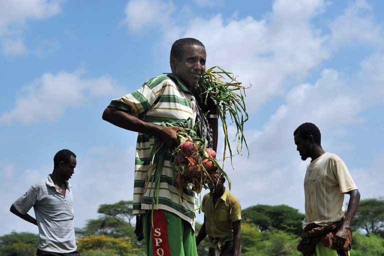 <p>A Somali farmer holds his harvest of bulb-onions at an irrigation scheme near Dollow in central Somalia, on November 21, 2011. AFP PHOTO/Tony KARUMBA. (Photo credit should read TONY KARUMBA/AFP/Getty Images)</p>