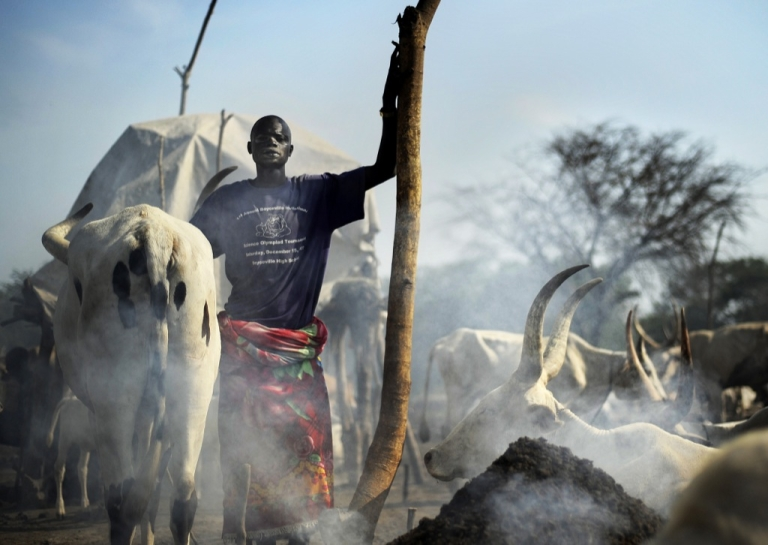 <p>A herdsman stands among his cattle at a cattle-camp near South Sudan's central town of Rumbek. One of Africa's longest-running wars left this land in ruins and battling a bitter legacy that threatens prospects for peace — a stockpile of weapons spurring cattle raids and banditry.</p>