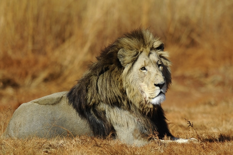 <p>A lion is pictured at the private Rhino and Lion Nature Reserve on July 21, 2010, in Krugersdorp, north of Johannesburg, South Africa.</p>