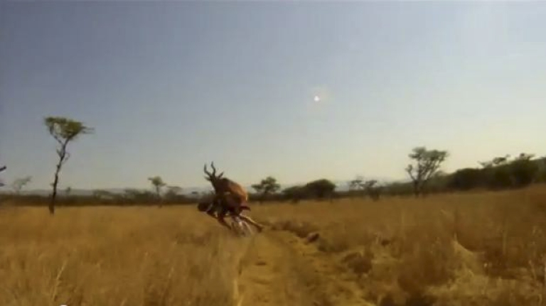 <p>A South African mountain biker is T-boned by an antelope, identified as a Red Hartebeest, during a race in KwaZulu-Natal province, in this still from a YouTube video.</p>