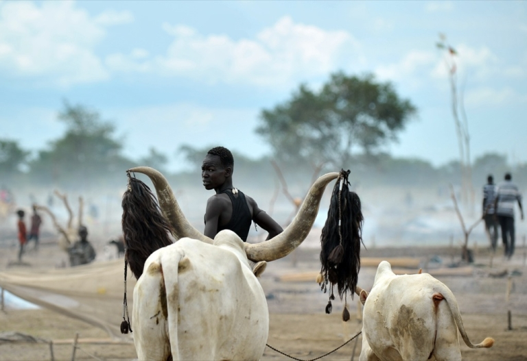 <p>A herdsman from the Nuer tribe stands among his cattle at a cattle-camp, near Nyal, in South Sudan on Nov. 11, 2011. One of Africa's longest-running wars left this land in ruins and battling a bitter legacy that threatens prospects for peace — a stockpile of weapons spurring cattle raids and banditry.</p>