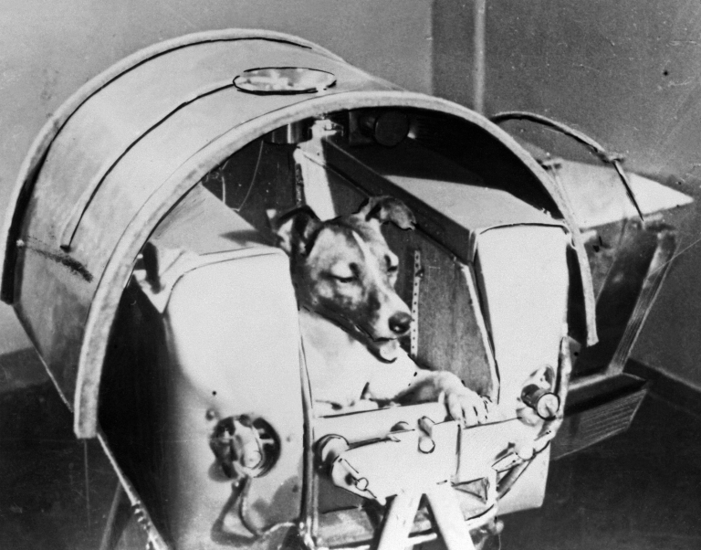 <p>A Nov. 1957 photo of the dog Laika, the first living creature ever sent into space, aboard Soviet spacecraft Sputnik II. Laika died a few hours after the launch from stress and overheating, which was likely due to a malfunction in the thermal control system.</p>