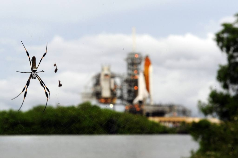 <p>The space shuttle Atlantis is visible through a spider's web on Merritt Island, in Cape Canaveral, Florida.</p>