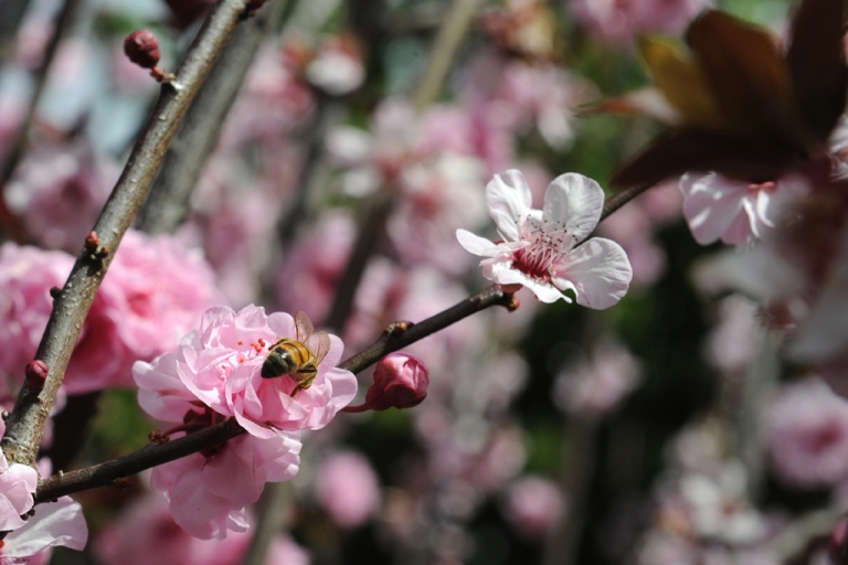 <p>A new study suggests that global warming resulted in the earliest spring flowers in US history in 2010 and 2012.</p>