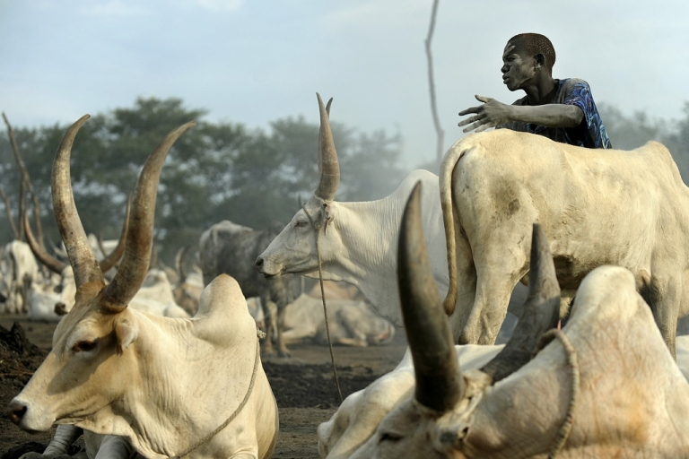 <p>A herdsman from the Dinka tribe is pictured near South Sudan's central town of Rumbek on November 13, 2011. South Sudan is coping with frequent bouts of cattle banditry while across the border to the north, Sudan President Omar al-Bashir is challenged by several different rebels groups.</p>