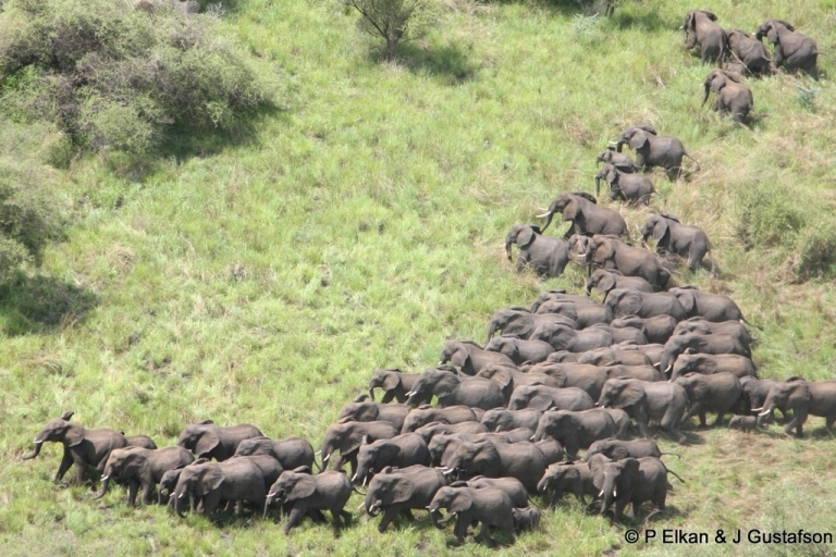 <p>Elephants cross the plains of the Boma-Jonglei landscape in South Sudan.</p>