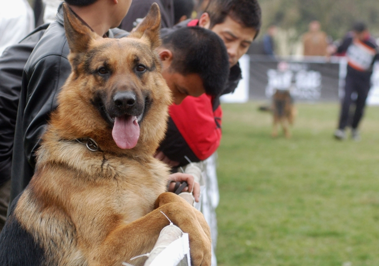 <p>A Pennsylvania woman saved her German Shepherd from a bear attack in her backyard.</p>