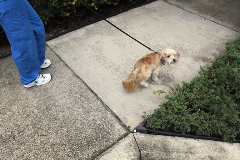 <p>Maggie the dog looks to do her business.</p>