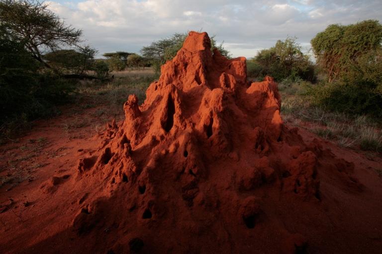 <p>A termite mound catches the evening sun in the Masai Mara Game Reserve, Kenya.</p>